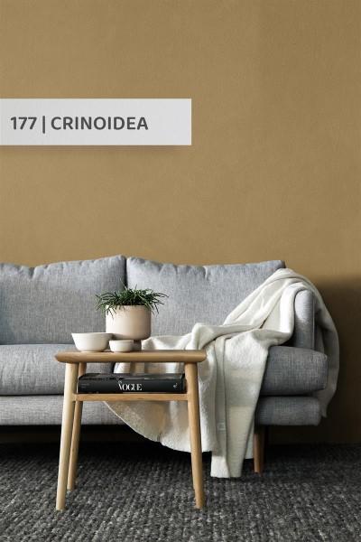 Volvox | Espressivo Lehmfarbe | Crinoidea 177